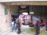 pferd223.JPG